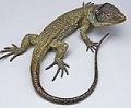 Picture of reptile